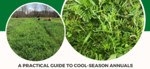 Cover photo for Virtual Forage Field Day: Cool-Season Annuals